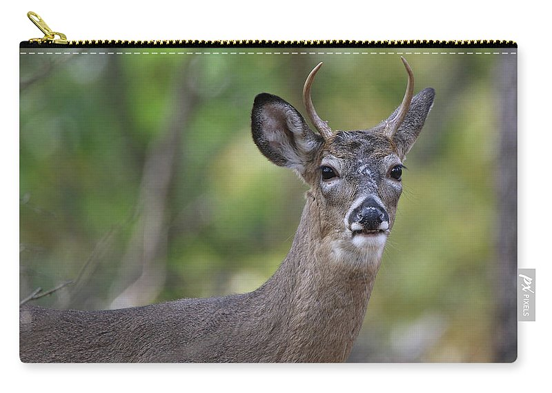 White Tail Deer Carry-all Pouch featuring the photograph White Tailed Deer Smithtown New York by Bob Savage