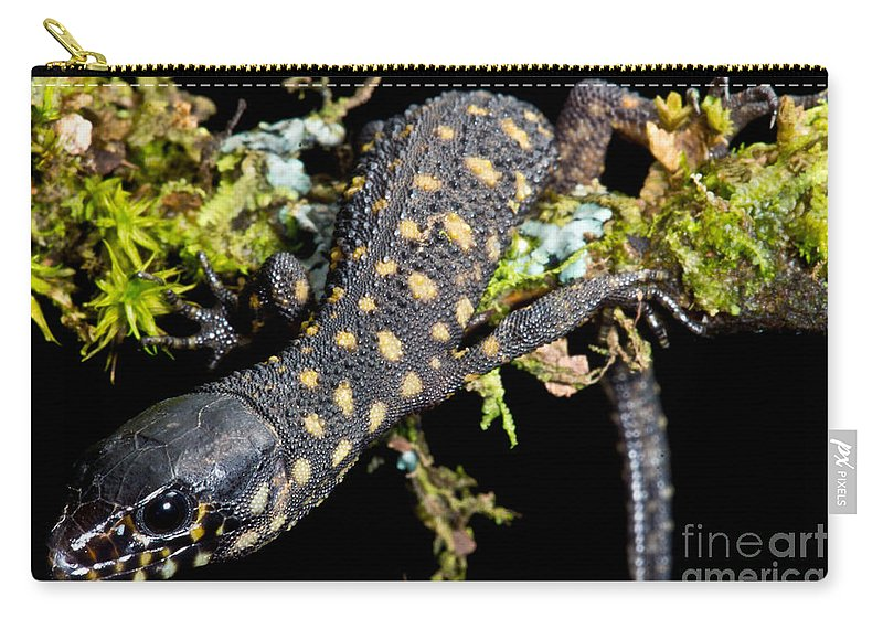 Xantusiid Carry-all Pouch featuring the photograph Yellow Spotted Tropical Night Lizard by Dant� Fenolio
