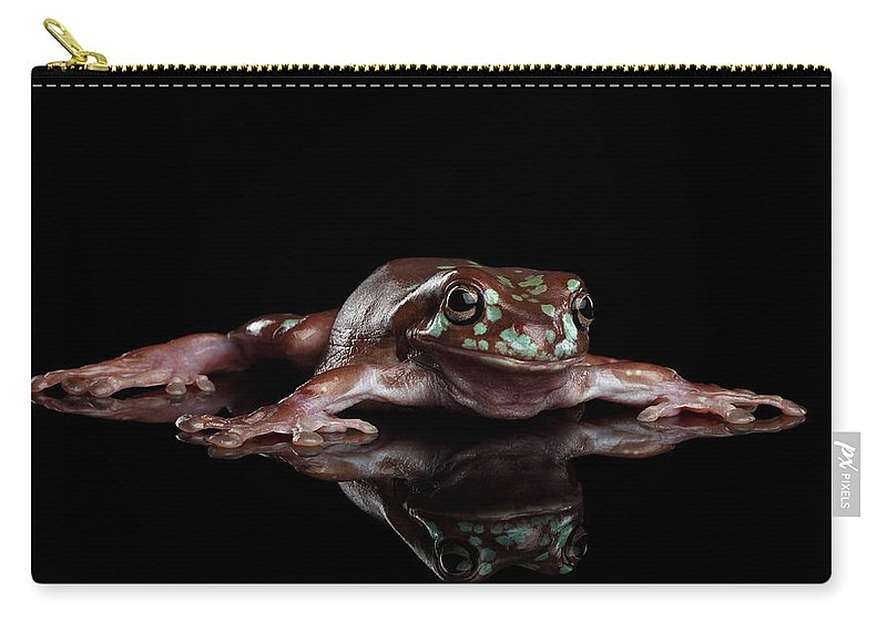 Amphibian Carry-all Pouch featuring the photograph Australian Green Tree Frog, Or Litoria Caerulea Isolated Black Background by Sergey Taran