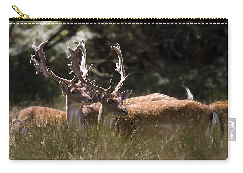 Fallow Deer Carry-all Pouch featuring the photograph Fallow Deer by Angel Ciesniarska