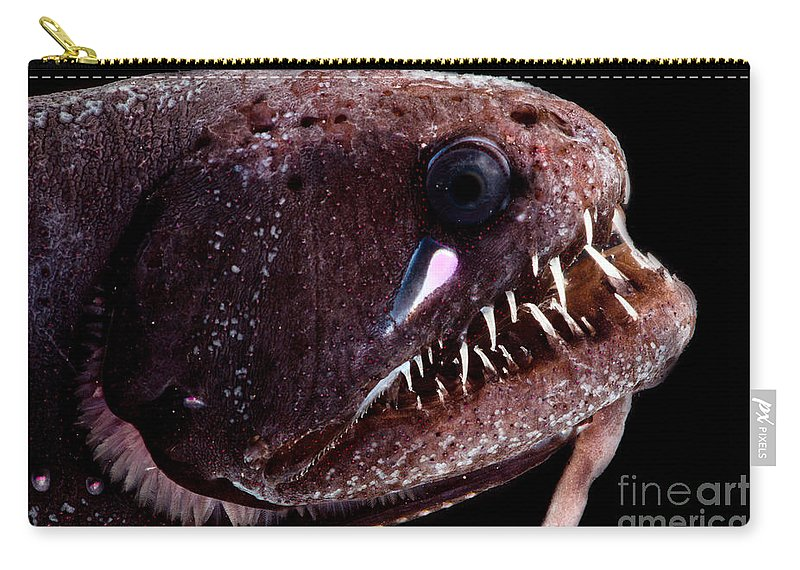 Threadfin Dragonfish Carry-all Pouch featuring the photograph Threadfin Dragonfish by Dant� Fenolio