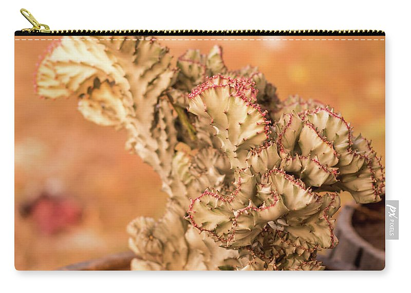 Sunlight Carry-all Pouch featuring the photograph Cactus by Sacksith Vorlachith
