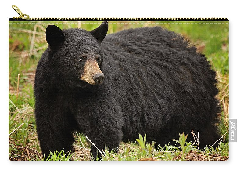 Maine Wildlife Carry-all Pouch featuring the photograph Maine Black Bear by Sharon Fiedler