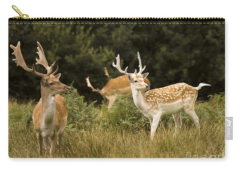 Fallow Deer Carry-all Pouch featuring the photograph Fallow Deer by Angel Tarantella