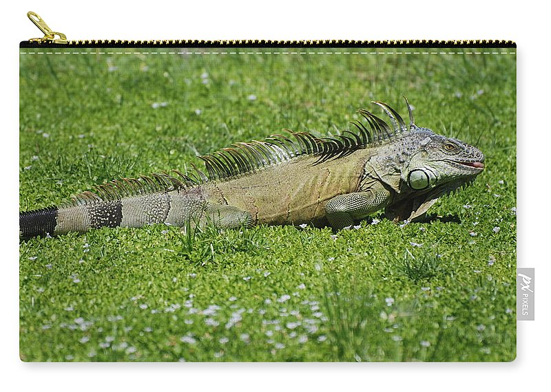 Macro Carry-all Pouch featuring the photograph I Iguana by Rob Hans