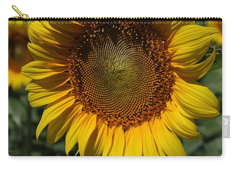 Sunflowers Carry-all Pouch featuring the photograph Sunflower Series by Amanda Barcon