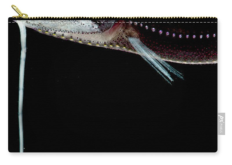 Dragonfish Carry-all Pouch featuring the photograph Deep Sea Dragonfish by Dant� Fenolio