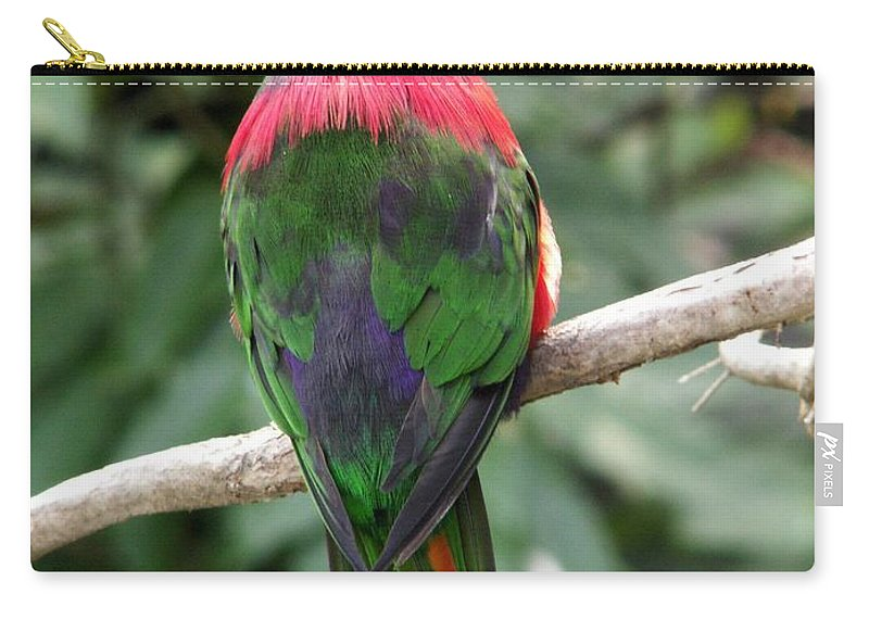 Bird Carry-all Pouch featuring the photograph A Bird's Perspective by Amy Fose