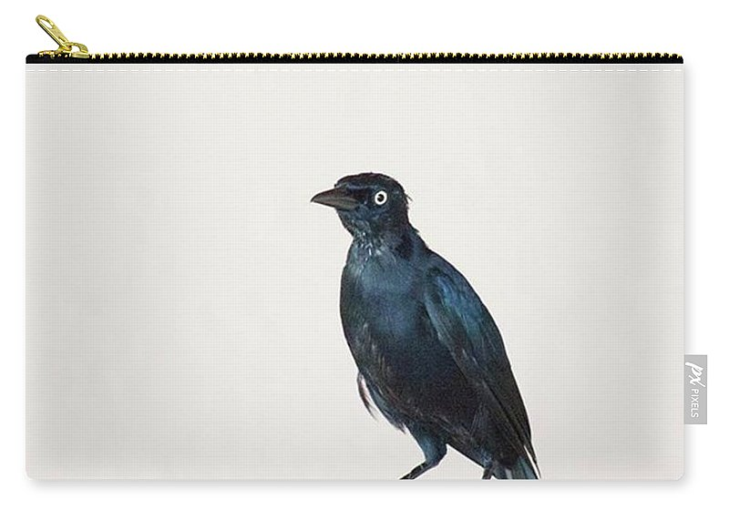 Caribgrackle Carry-all Pouch featuring the photograph A Carib Grackle (quiscalus Lugubris) On by John Edwards