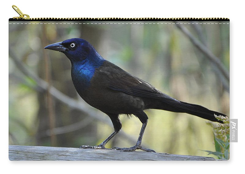 Birds Carry-all Pouch featuring the photograph A Clever Thief by Jan Amiss Photography