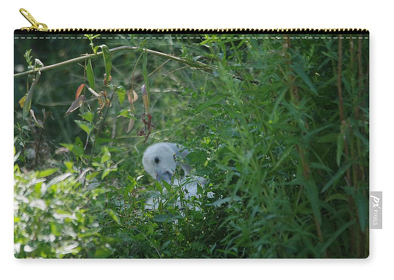 Swan Carry-all Pouch featuring the photograph A Cygnet Resting by Jeff Swan