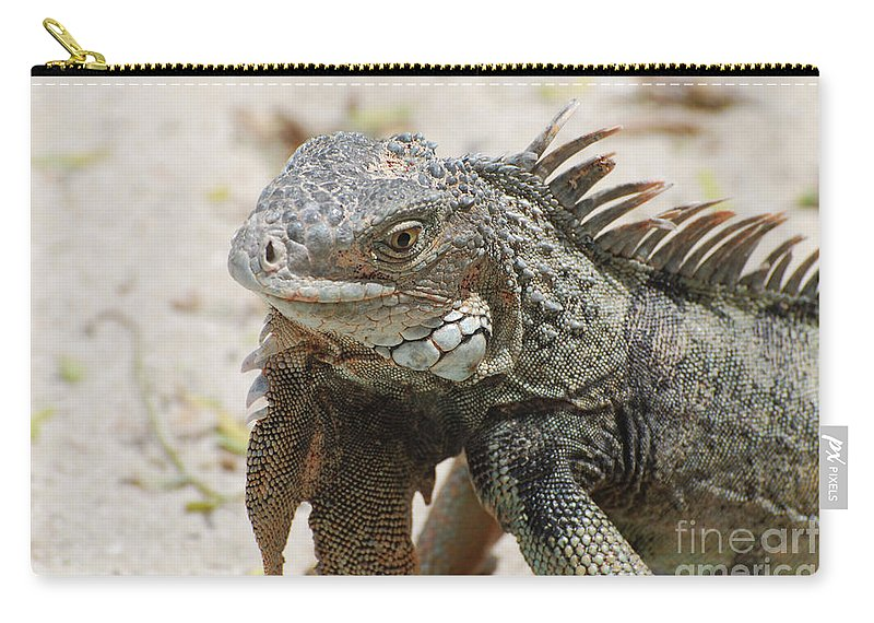 Iguana Carry-all Pouch featuring the photograph A Gray Iguana With Spines Along It's Back by DejaVu Designs
