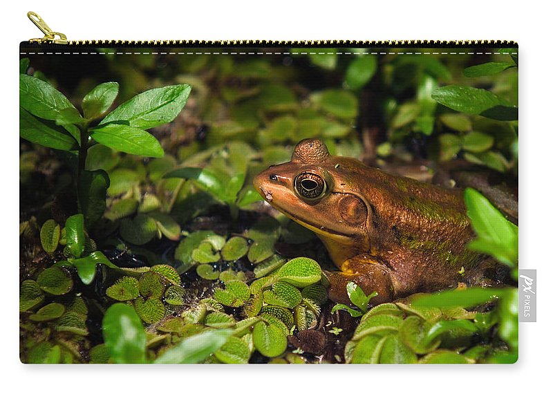 Frog Carry-all Pouch featuring the photograph A Little Bronze by Christopher Holmes