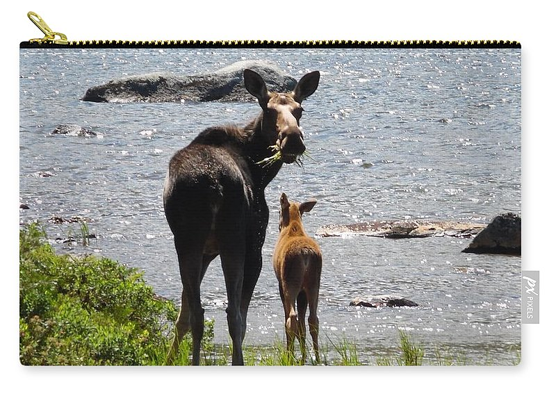 Moose Carry-all Pouch featuring the photograph A Mom And Her Baby by Julie Houle