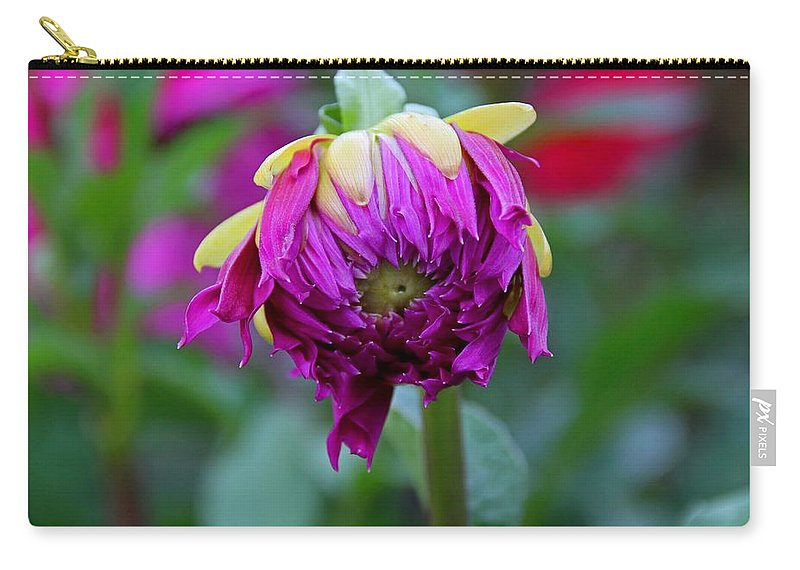Dahlia Carry-all Pouch featuring the photograph A New Tune by Michiale Schneider