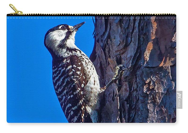 Rare Bird Carry-all Pouch featuring the photograph A Rare Bird by Gary Holmes