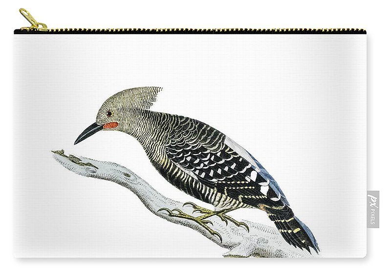 Woodpecker Carry-all Pouch featuring the painting A Red Headed Woodpecker 2 by Douglas Barnett