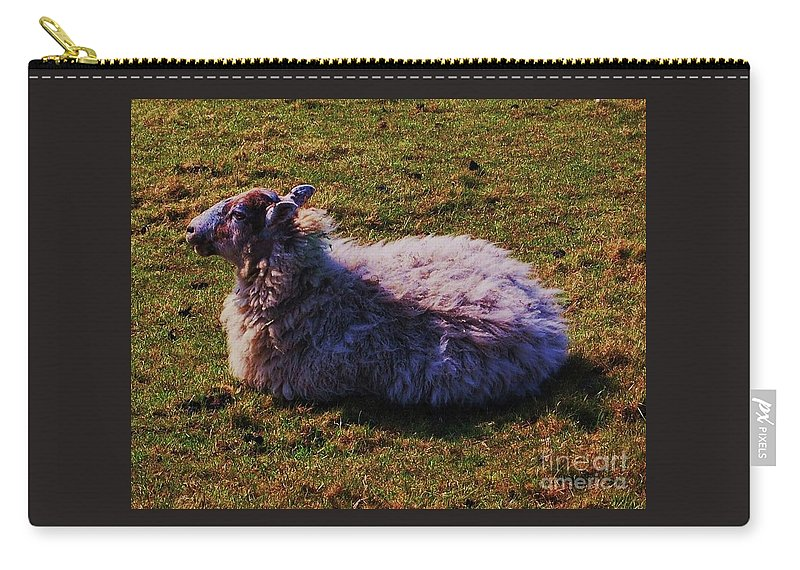 Art From Wales Farm Animal Portrait Sheep Sunbathing Serene Pasture Grass Peaceful Setting Fauna Nature Wood Print Canvas Print Metal Frame Poster Print Available On Greeting Cards Pouches Spiral Notebooks Shower Curtains T Shirts Tote Bags Pouches And Phone Cases Carry-all Pouch featuring the photograph A Sheep In Wales by Marcus Dagan