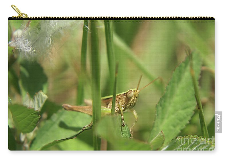 Grasshopper Carry-all Pouch featuring the photograph A Shy Grasshopper by Olga Hamilton