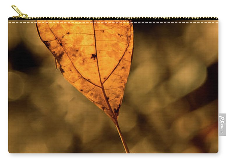 Beech Carry-all Pouch featuring the photograph A Single Leaf In The Late Sun by Douglas Barnett