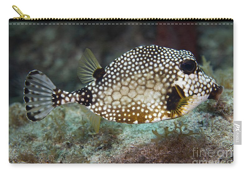 Sea Life Carry-all Pouch featuring the photograph A Spotted Trunkfish, Key Largo, Florida by Terry Moore