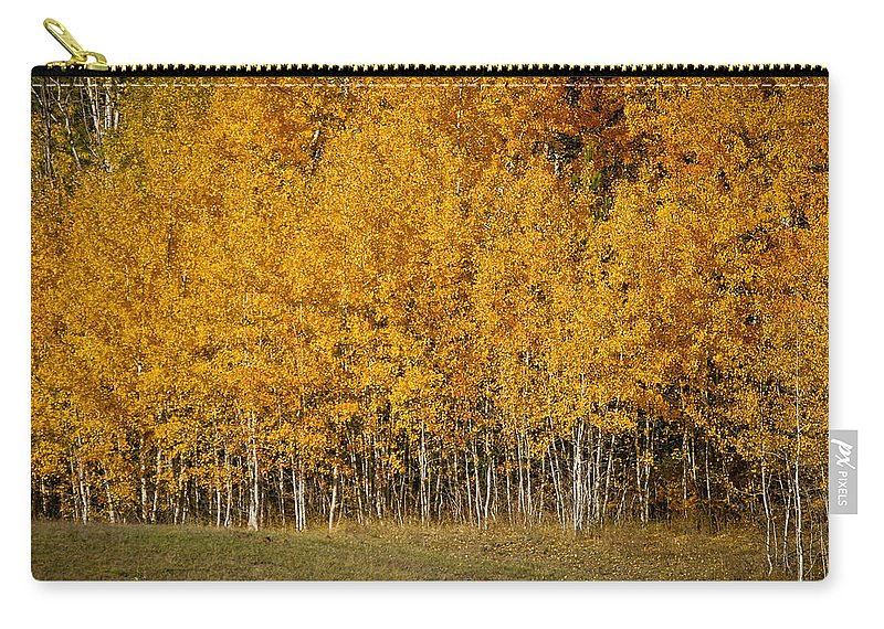 Trees Carry-all Pouch featuring the photograph A Stand Of Aspen by Albert Seger