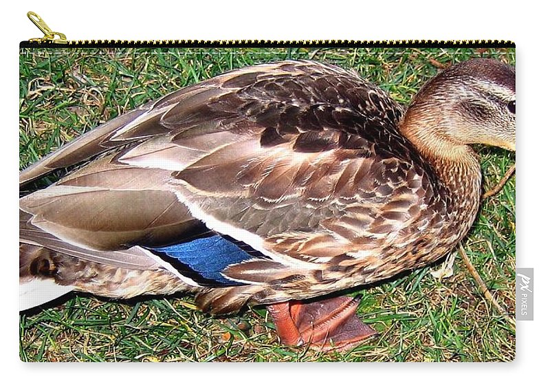 Duck Carry-all Pouch featuring the photograph A Tame Crow by Will Borden