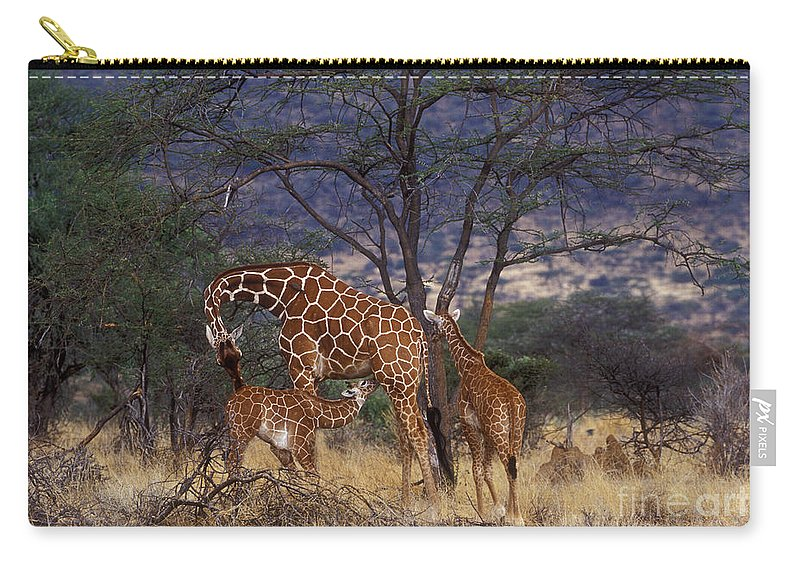 Giraffe Carry-all Pouch featuring the photograph A Tender Moment by Sandra Bronstein