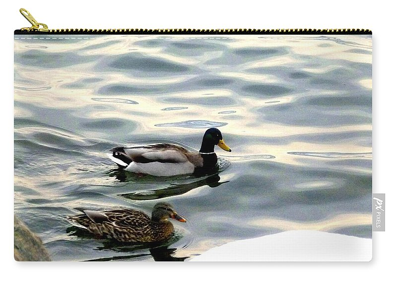 Mallard Ducks Carry-all Pouch featuring the photograph A Winter Swim by Will Borden