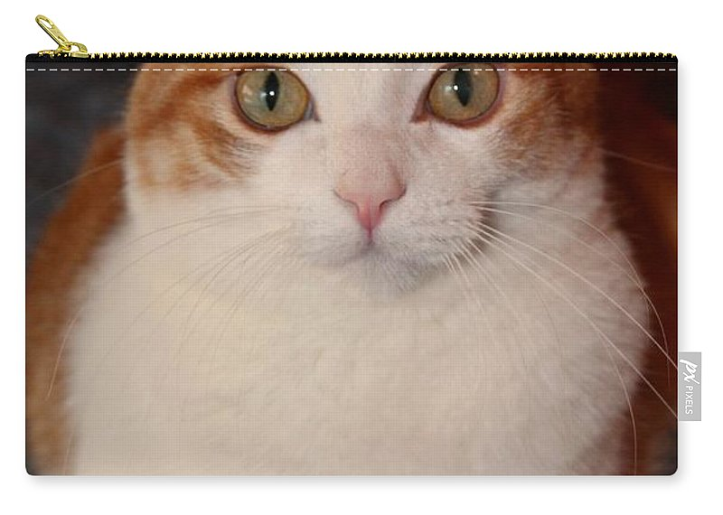 Cat Carry-all Pouch featuring the photograph Abner 1 by Michiale Schneider