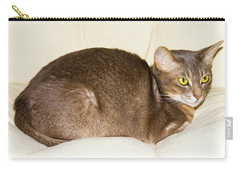 Abyssinian Carry-all Pouch featuring the photograph Abyssinian Cat On Chair Pillow, Symbol Of Comfort by Tetyana Ustenko
