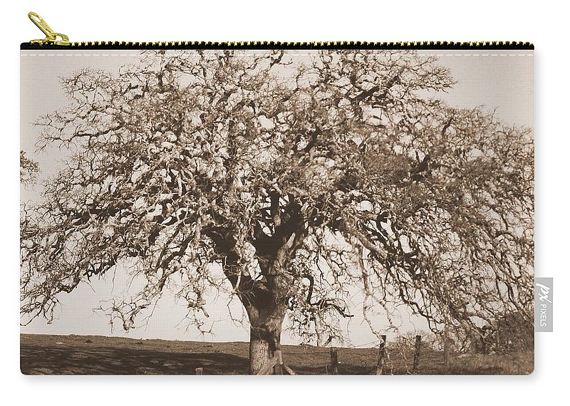 Tree Carry-all Pouch featuring the photograph Acacia Tree In Sepia by Carol Groenen