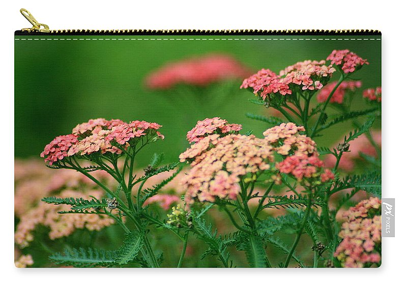 Yarrow Carry-all Pouch featuring the photograph Achillae's Heel by Marla McFall