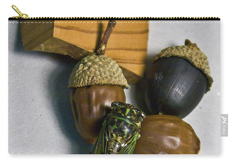 Acrpm Carry-all Pouch featuring the photograph Acrons And Cicada by Douglas Barnett