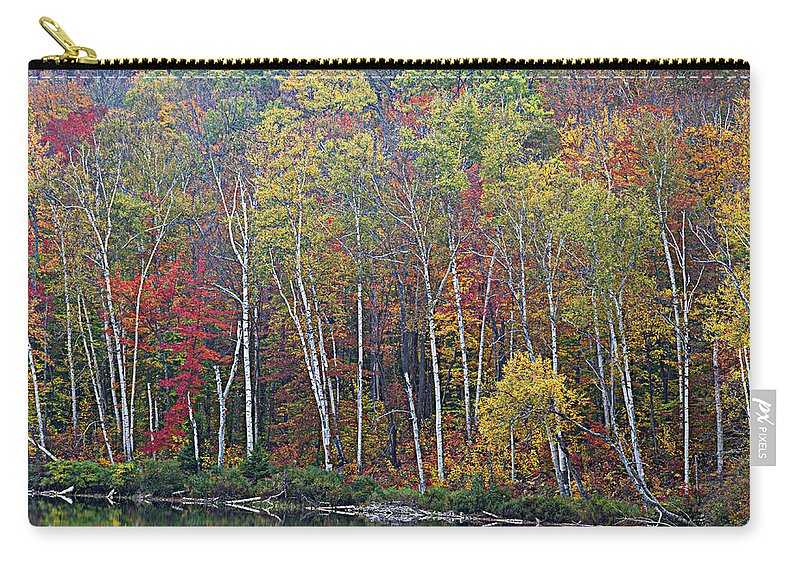 Birch Trees Carry-all Pouch featuring the photograph Adirondack Birch Foliage by Tony Beaver