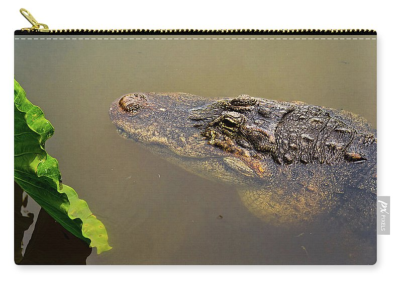 Alligator Carry-all Pouch featuring the photograph Admiring The Leaf by Christopher Holmes