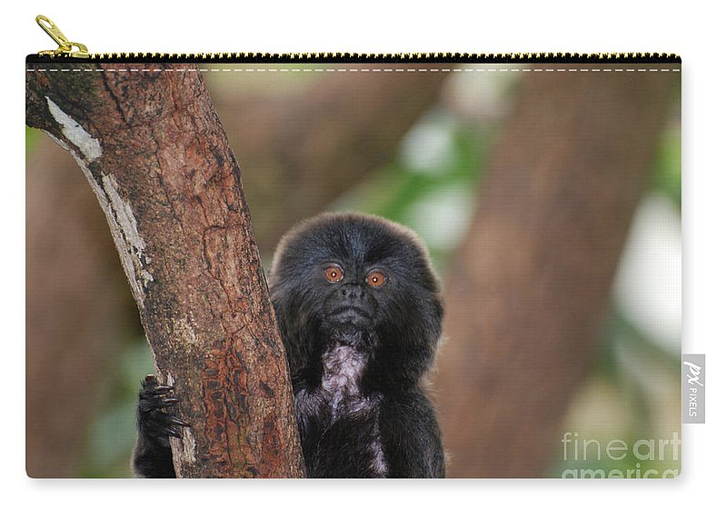 Goeldi Carry-all Pouch featuring the photograph Adorable Goeldi Monkey In A Tree by DejaVu Designs