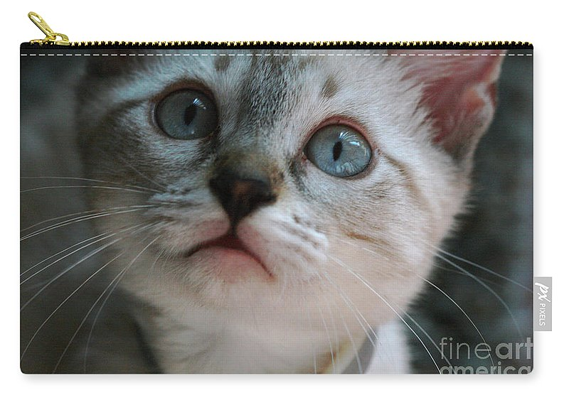 Cats Carry-all Pouch featuring the photograph Adorable Kitty by Kim Henderson