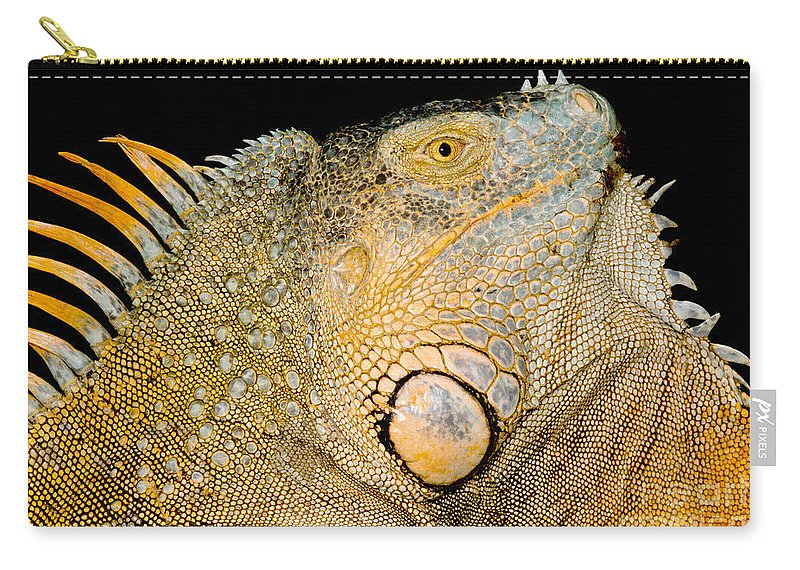 Iguana Iguana Carry-all Pouch featuring the photograph Adult Male Green Iguana by Dant� Fenolio