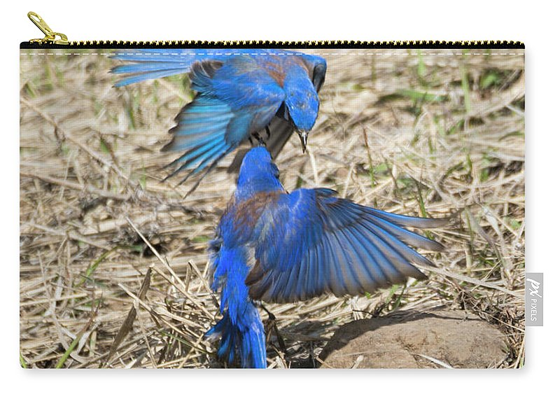 Bluebirds Carry-all Pouch featuring the photograph Aerial Assault by Mike Dawson