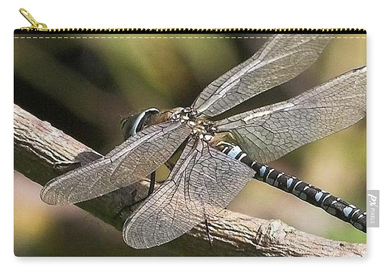 Dragonfly Carry-all Pouch featuring the photograph Aeshna Juncea - Common Hawker Taken At by John Edwards
