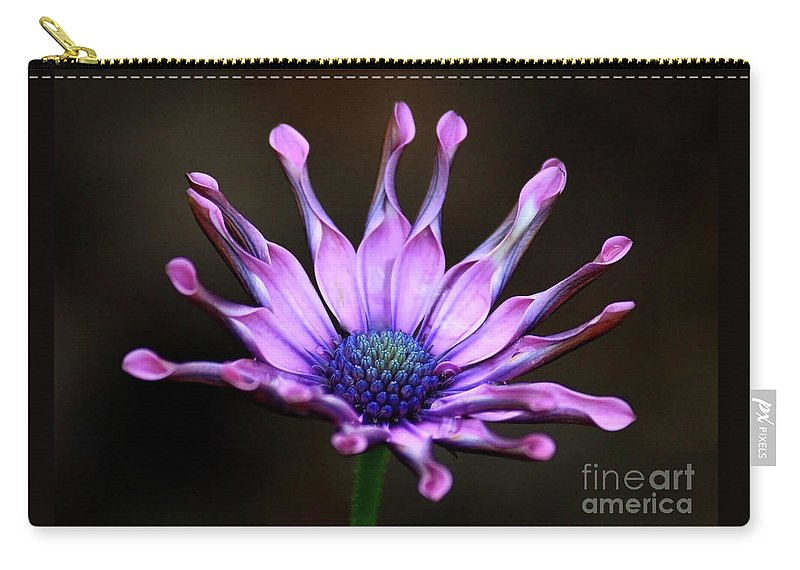 Nature Carry-all Pouch featuring the photograph African Daisy Portrait by Carol Groenen