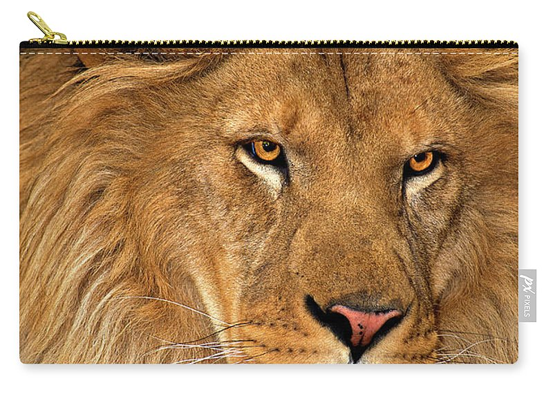 Dave Welling Carry-all Pouch featuring the photograph African Lion Panthera Leo Wildlife Rescue by Dave Welling