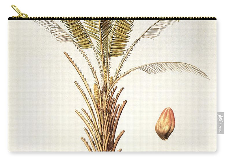 1780 Carry-all Pouch featuring the photograph African Oil Palm by Granger