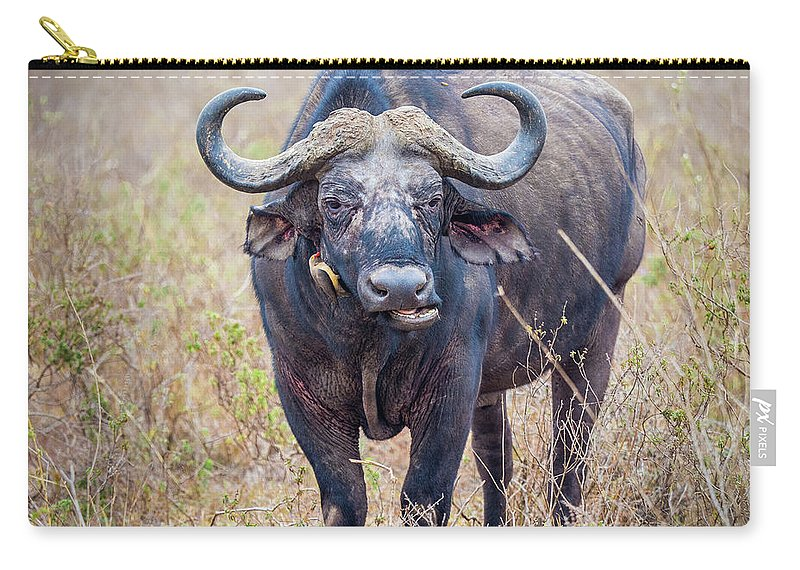 Water Buffalo Carry-all Pouch featuring the photograph African Water Buffalo And Friends by Robin Zygelman