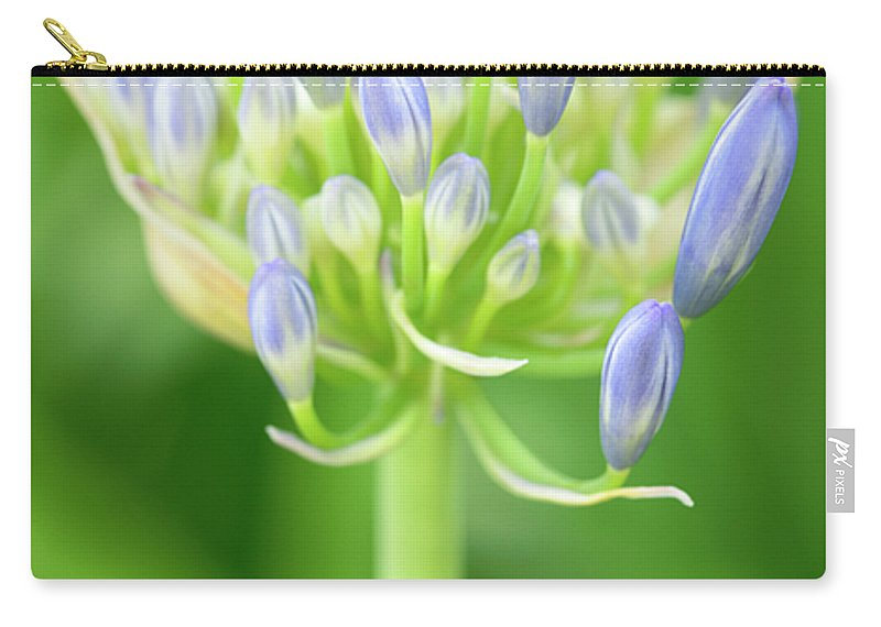 Agapanthus Africanus Carry-all Pouch featuring the photograph Agapanthus Africanus Flower by Neil Overy