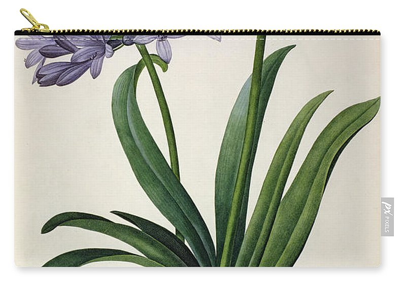 Agapanthus Carry-all Pouch featuring the painting Agapanthus Umbrellatus by Pierre Redoute