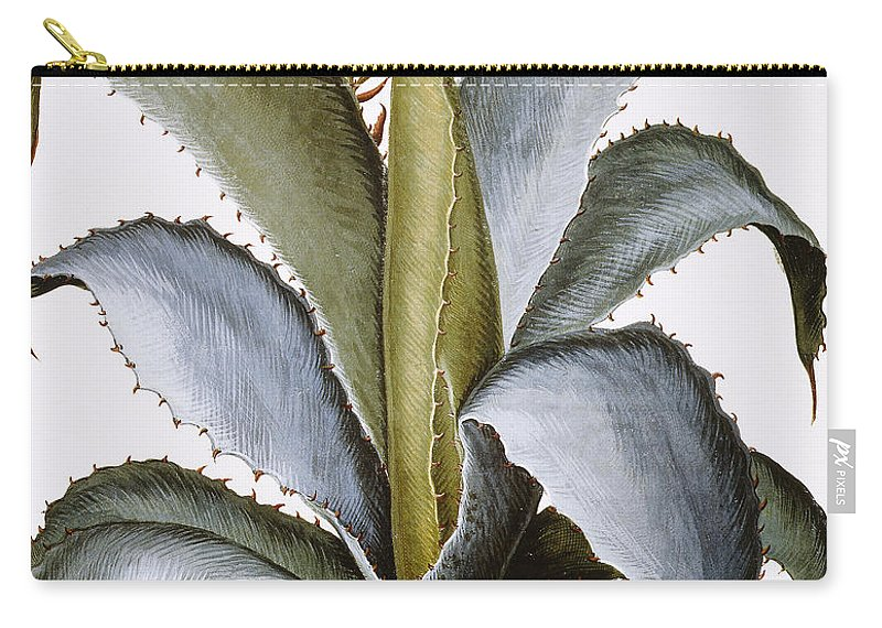1613 Carry-all Pouch featuring the photograph Agave, 1613 by Granger
