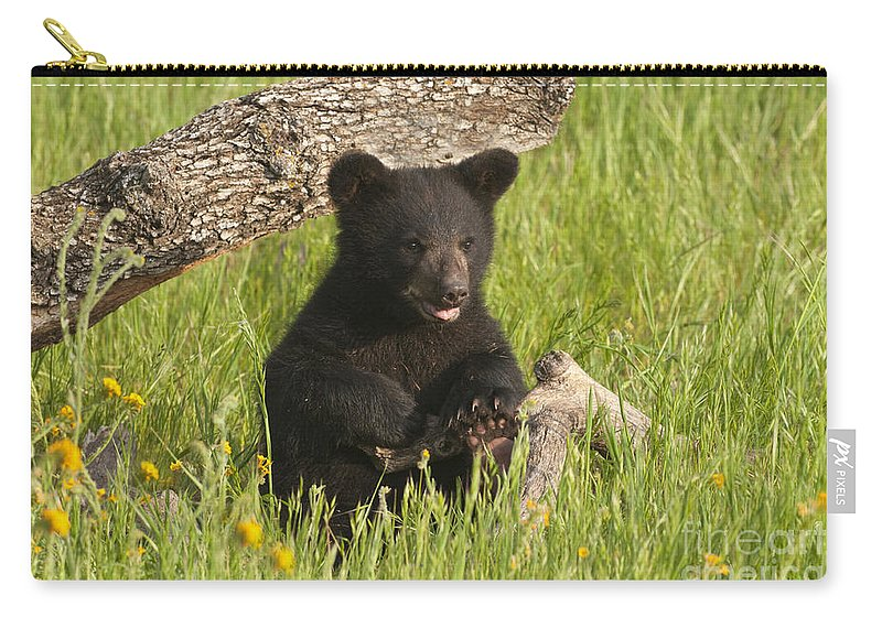 Bear Carry-all Pouch featuring the photograph Ain't I Cute by Sandra Bronstein