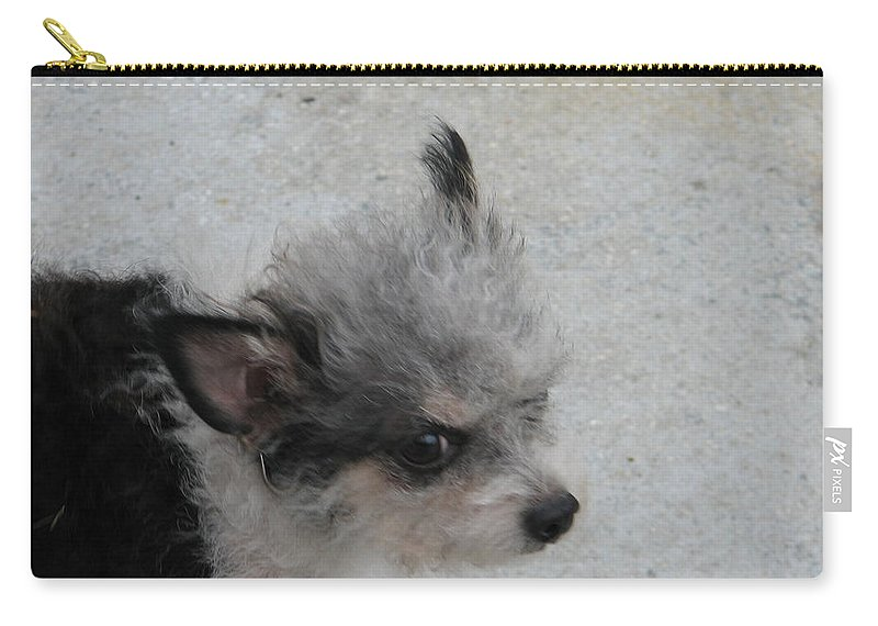 Puppy Carry-all Pouch featuring the photograph Airport Pup by Kelly Mezzapelle